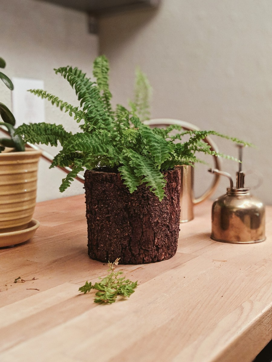 My Easy Guide to Plant Care for Beginners